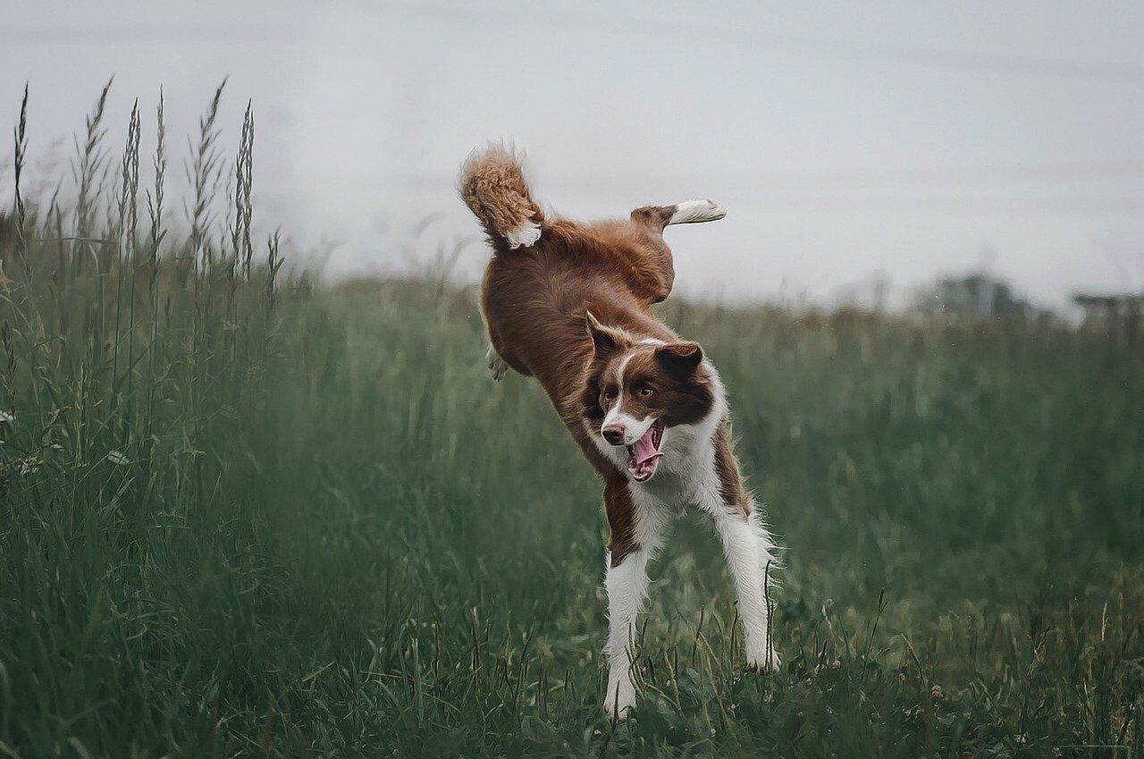 rendre son chien heureux