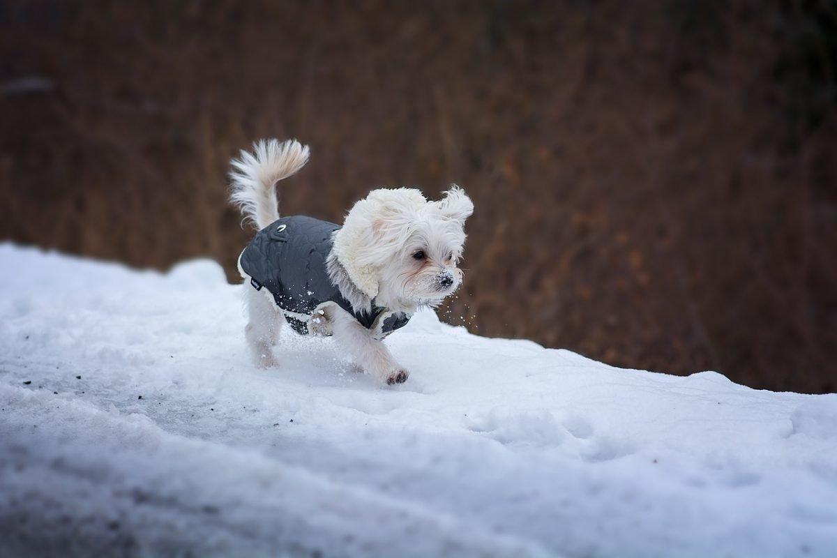 protéger son chien en hiver