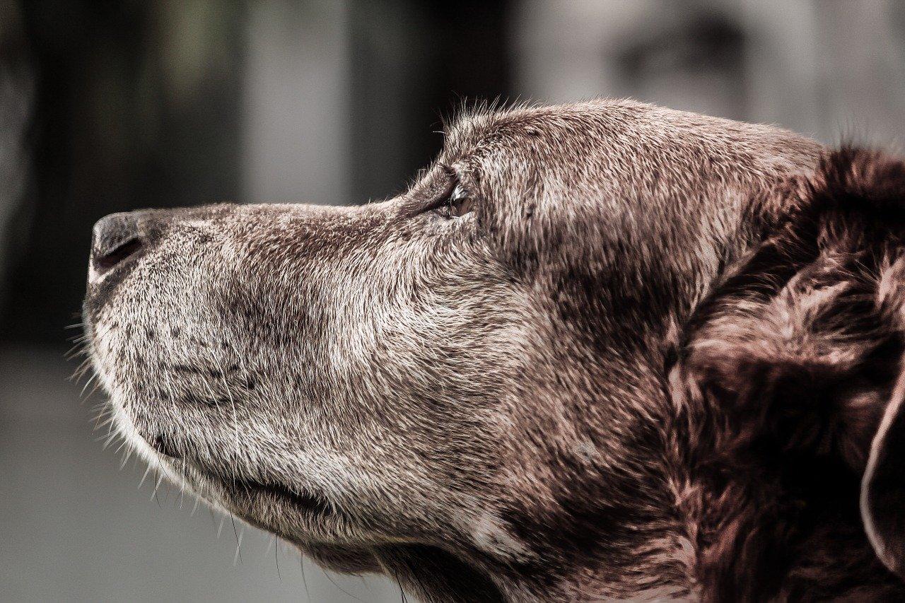 s'occuper d'un vieux chien