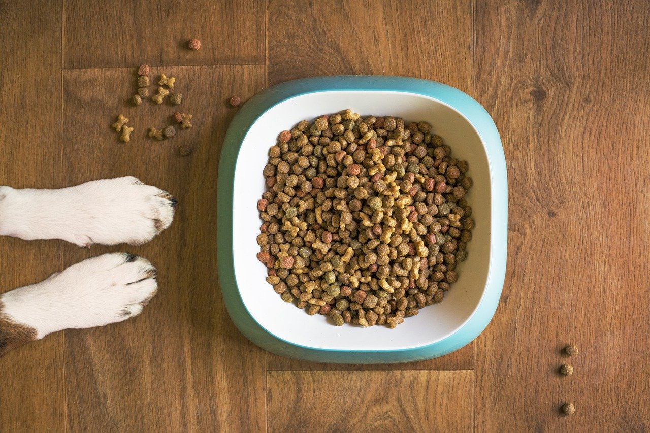 comment-bien-nourrir-son-chien-?