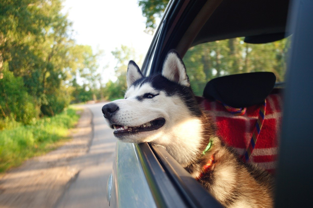 faire un voyage avec son chien
