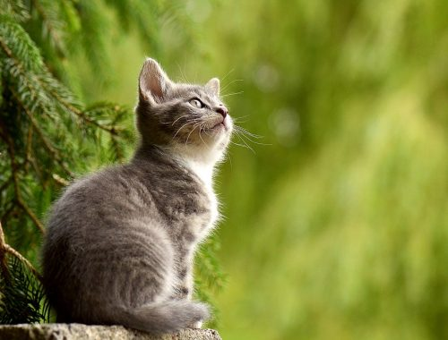 garder son chat dans un endroit frais