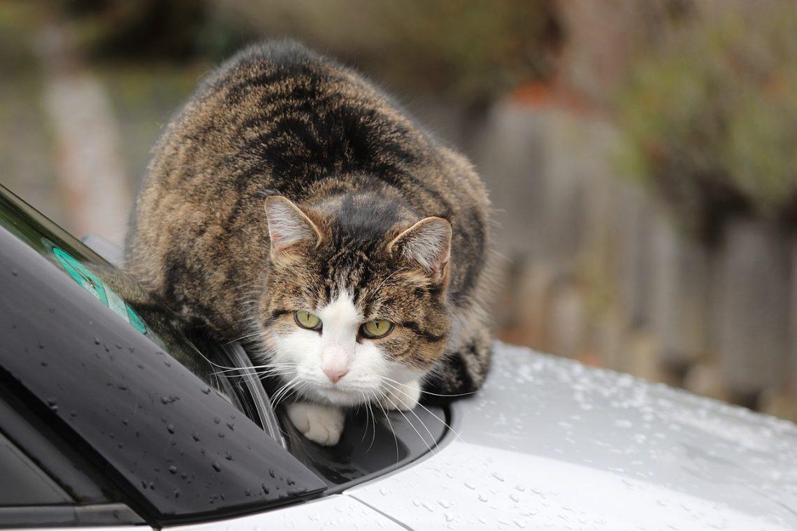 chat vacances voiture