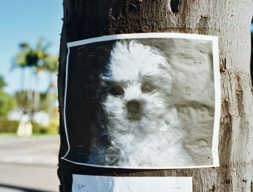 chien perdu