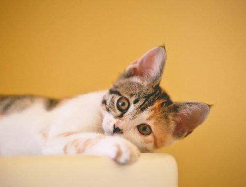 pipi de chat comment lutter