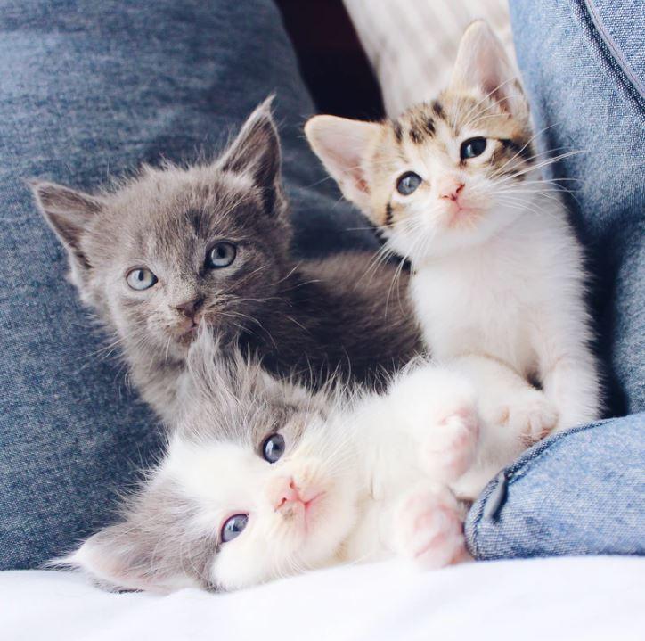 chats d'intérieurs