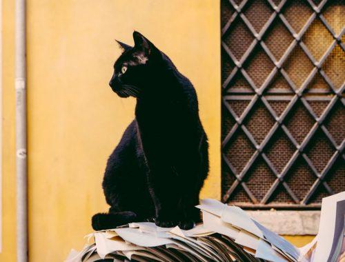 chat vole objet