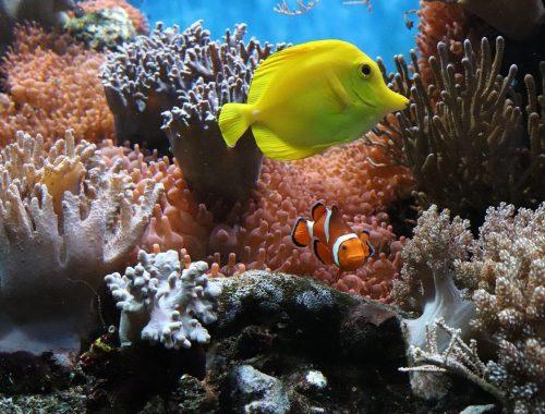 decoration-aquarium