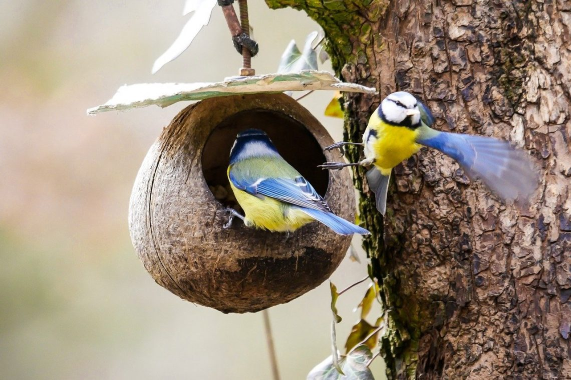 mangeoire-oiseaux