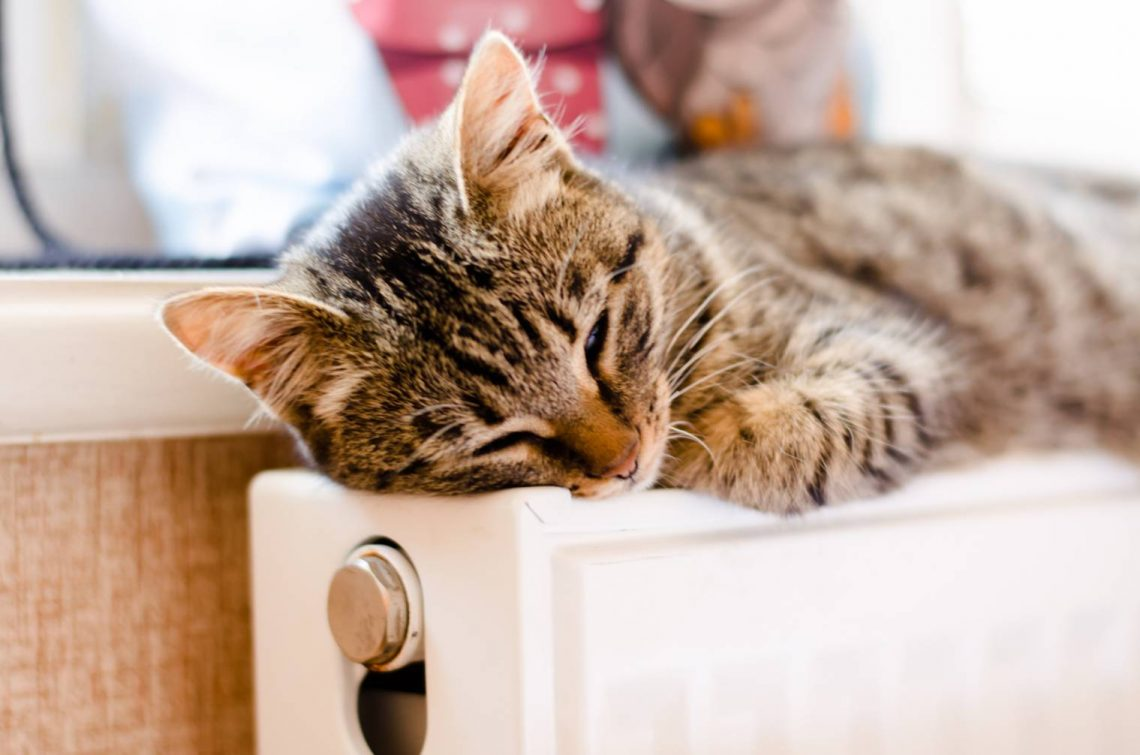chat-comprendre-sommeil
