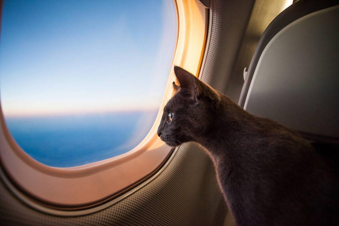 pratique-voyager-chat-avion