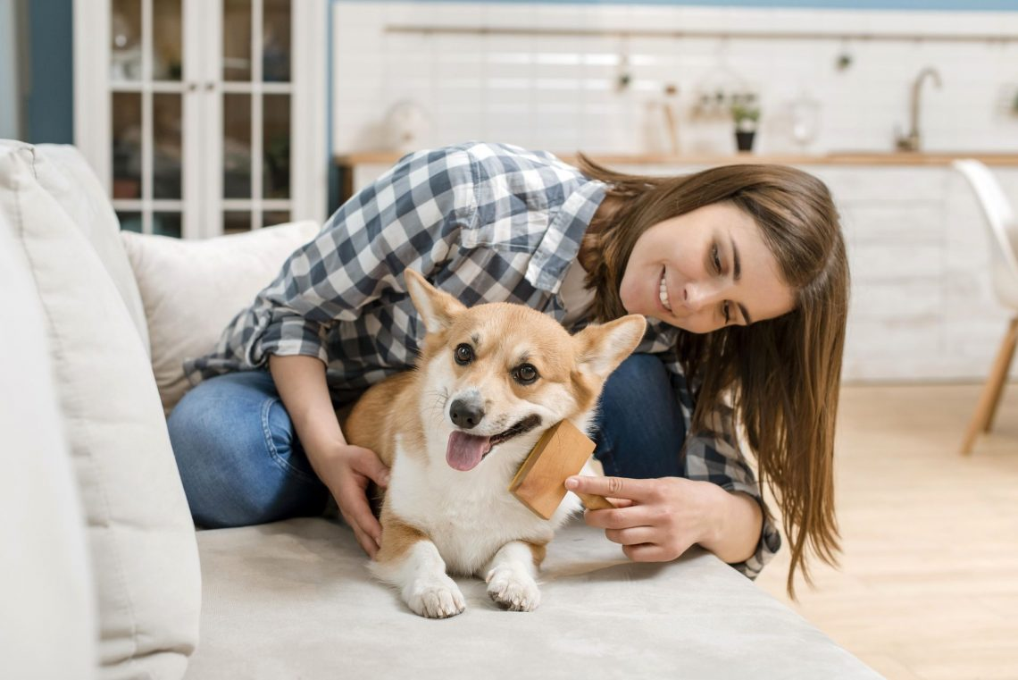 Les brosses pour chiens à poils courts