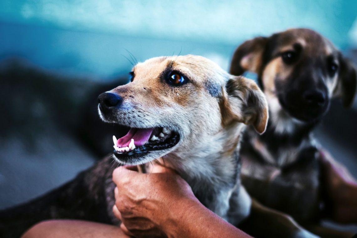 Qu'est-ce que l'hygiène buccale et dentaire pour les chiens ?