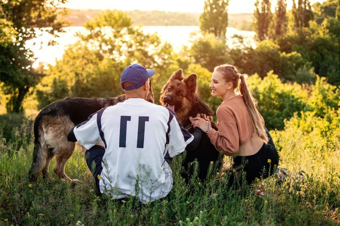 Comment la personnalité humaine influence-t-elle le dressage des chiens ?