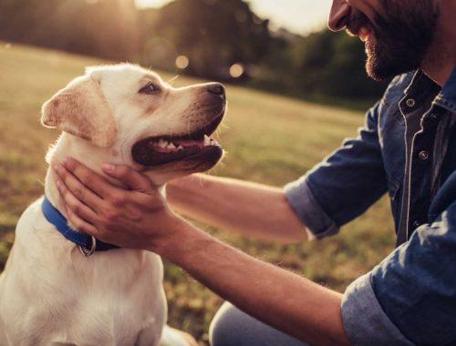 Un maître et son chien qui s'amusent en extérieur